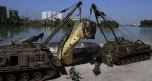 اكبر ثعبان في العالم , معلومات عن اكبر ثعابين فى العالم
