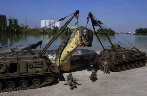 بالصور اكبر ثعبان في العالم , معلومات عن اكبر ثعابين فى العالم 2776