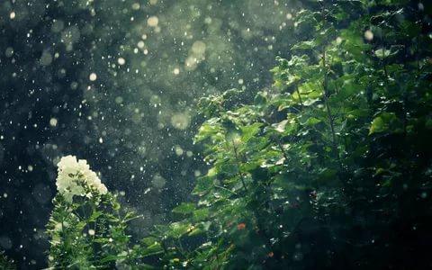 بالصور خلفيات مطر , خلية مطر جميلة ومميزة 2814 2