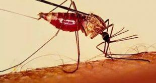 صوره مرض الملاريا , ما هو مرض الملاريا