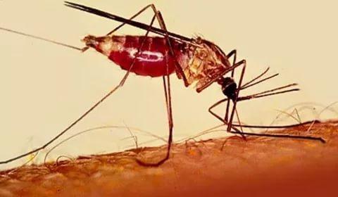 صور مرض الملاريا , ما هو مرض الملاريا