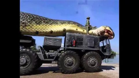 بالصور اكبر افعى في العالم , معلومات عن اكبر افاعى العالم 2955