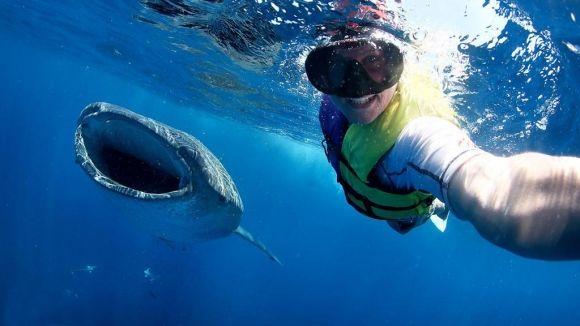 بالصور صور سمك القرش , صورة اكبر الاسماك فى العالم 3706 10