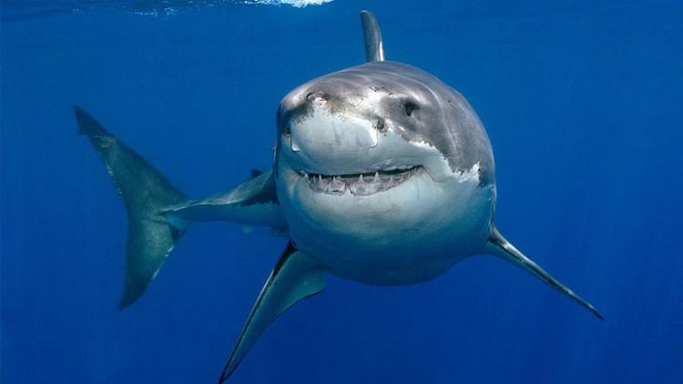 بالصور صور سمك القرش , صورة اكبر الاسماك فى العالم 3706 12