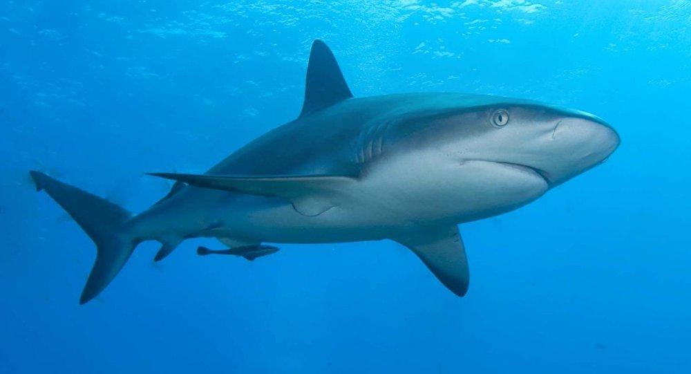 بالصور صور سمك القرش , صورة اكبر الاسماك فى العالم 3706 3