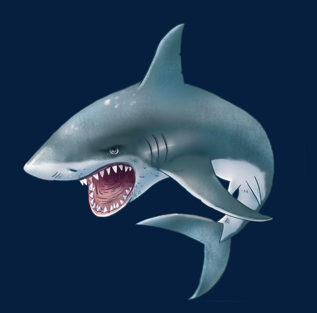 بالصور صور سمك القرش , صورة اكبر الاسماك فى العالم 3706 5