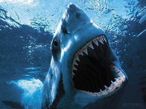 بالصور صور سمك القرش , صورة اكبر الاسماك فى العالم 3706 9