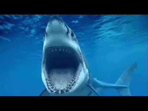 بالصور صور سمك القرش , صورة اكبر الاسماك فى العالم 3706