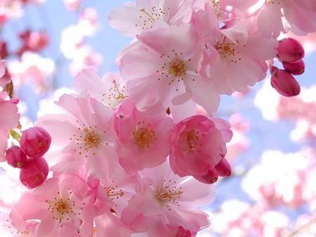 بالصور صور زهور , اجمل خلفيات الورد 3736 1