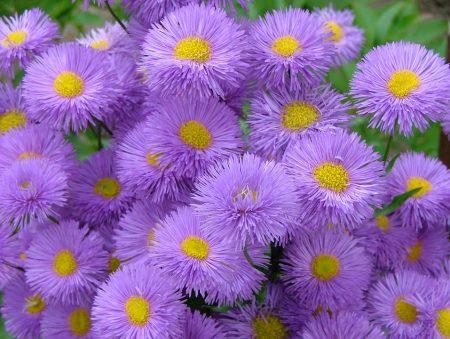 بالصور صور زهور , اجمل خلفيات الورد 3736 10