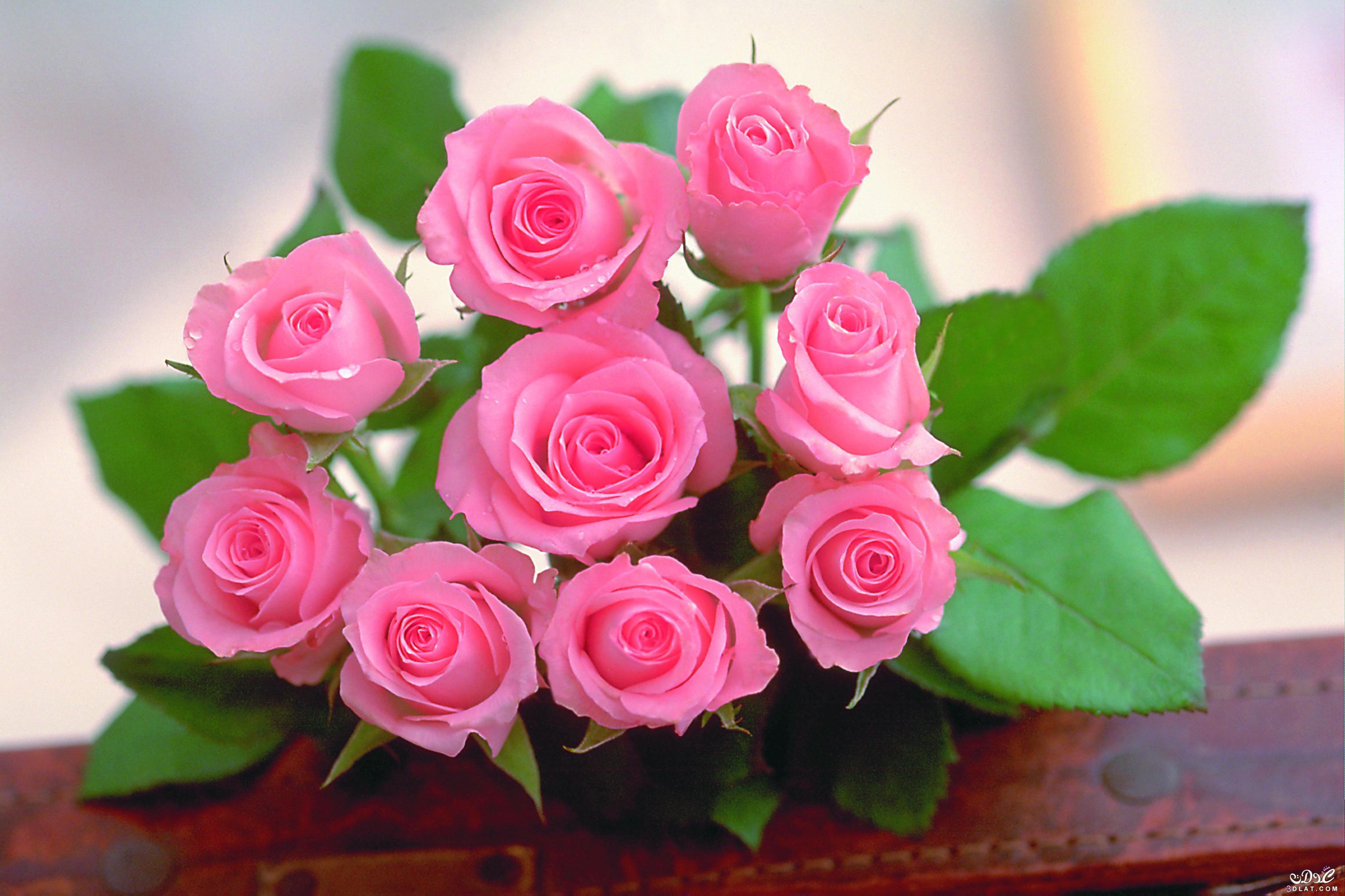 بالصور صور زهور , اجمل خلفيات الورد 3736 4
