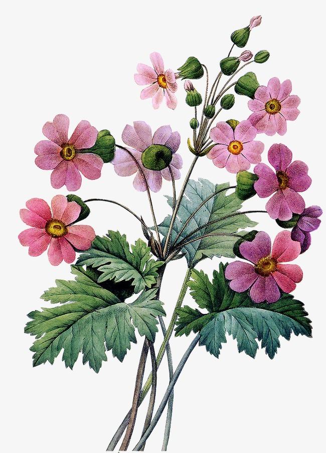 بالصور صور زهور , اجمل خلفيات الورد 3736 8