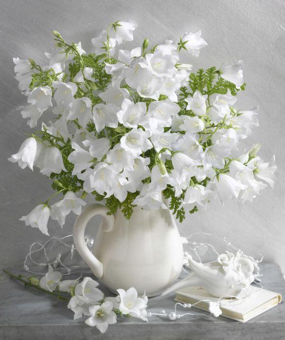 بالصور صور زهور , اجمل خلفيات الورد 3736 9