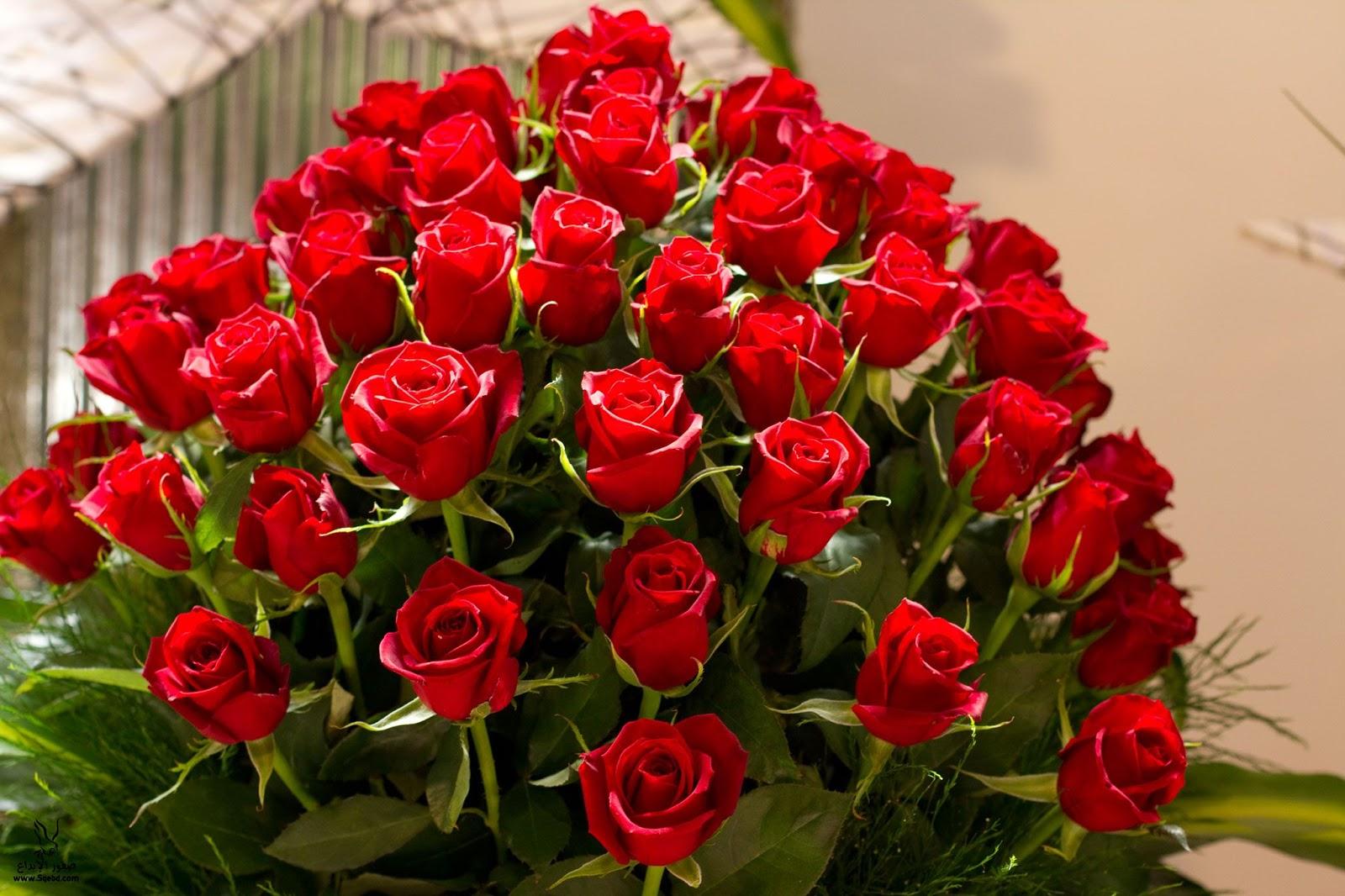 بالصور صور زهور , اجمل خلفيات الورد 3736