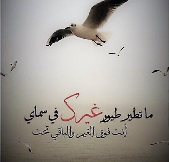 صورة كلام عسل للحبيبة , اجمل كلمات الغزل للمعشوقه 3742 1