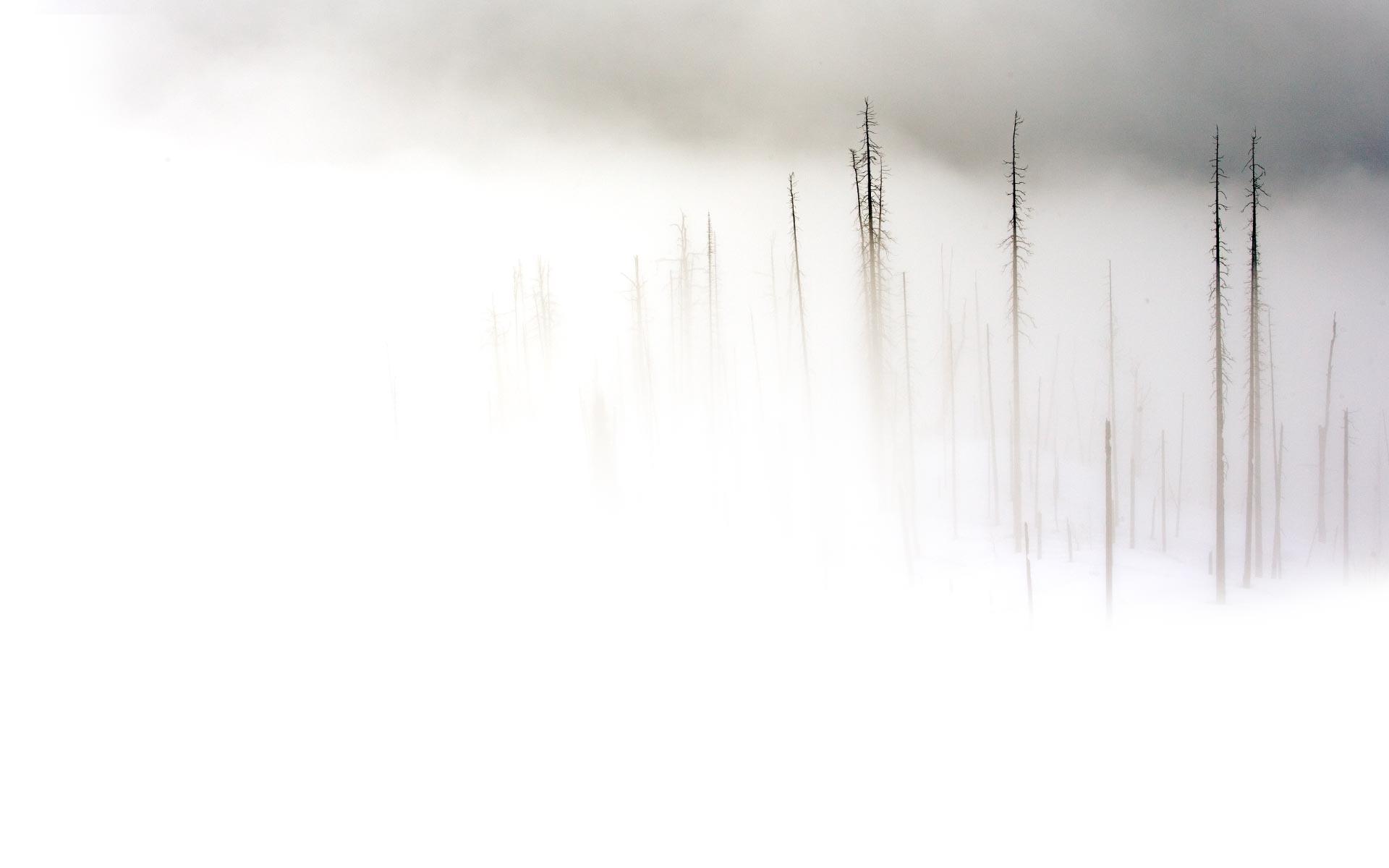 بالصور خلفية بيضاء ساده , اجمل الخلفيات الملونه 3856 11