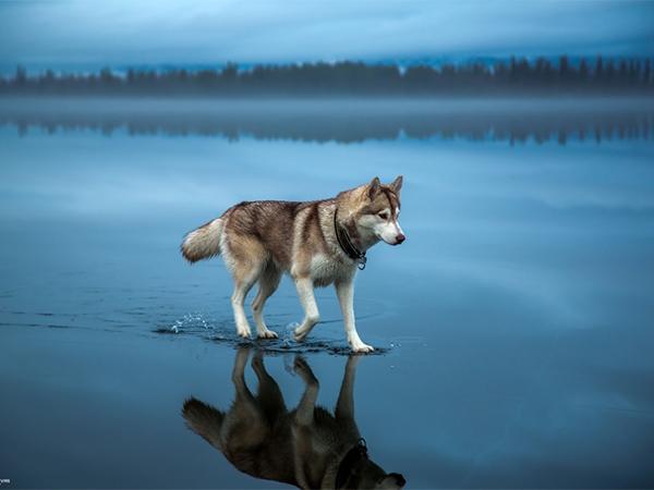صورة افضل الصور في العالم , اجمل صورة خلفية ساحرة فى العالم