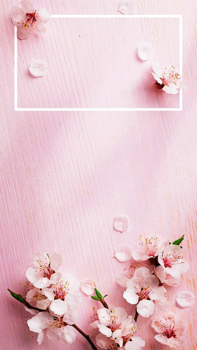 خلفيات وردية اجمل خلفية طبيعية حبيبي