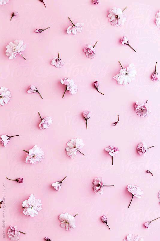 صورة خلفيات وردية , اجمل خلفية طبيعية