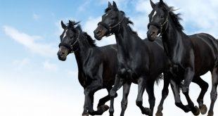 اجمل صور خيول , اروع خيول تراها العين
