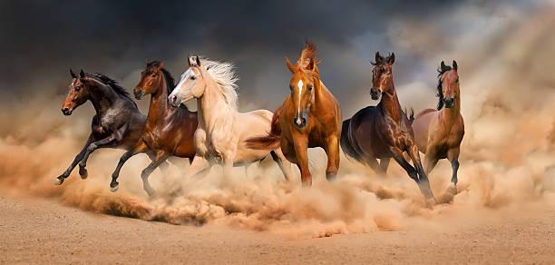 بالصور خيل اصيل , اجمل الخيول الاصيلة 1448 5