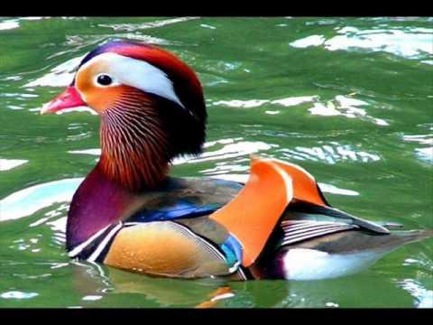 بالصور اجمل حيوان في العالم , صورة احلى الحيوانات فى العالم 2693 1