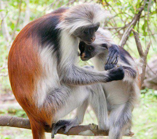 بالصور اجمل حيوان في العالم , صورة احلى الحيوانات فى العالم 2693 10