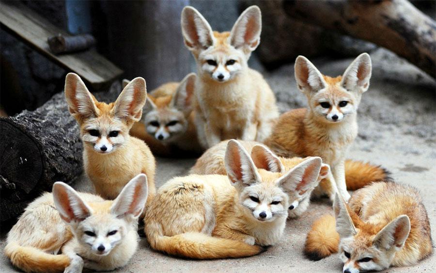 بالصور اجمل حيوان في العالم , صورة احلى الحيوانات فى العالم 2693 11