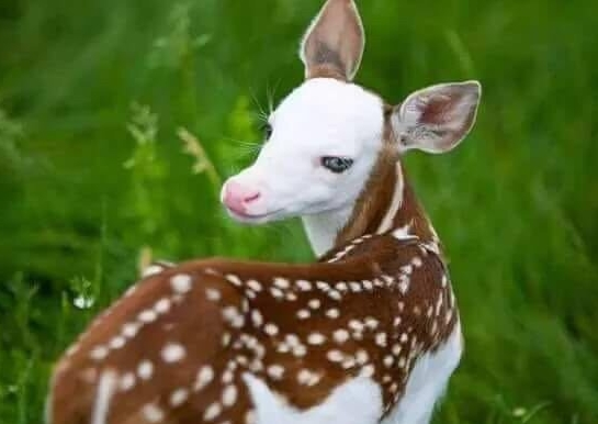 بالصور اجمل حيوان في العالم , صورة احلى الحيوانات فى العالم 2693 2