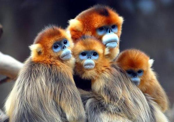 بالصور اجمل حيوان في العالم , صورة احلى الحيوانات فى العالم 2693 5