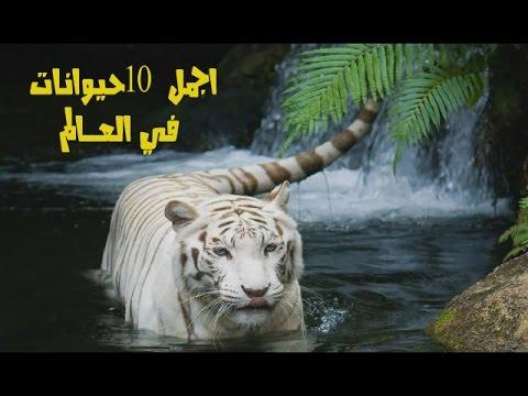 بالصور اجمل حيوان في العالم , صورة احلى الحيوانات فى العالم 2693 7