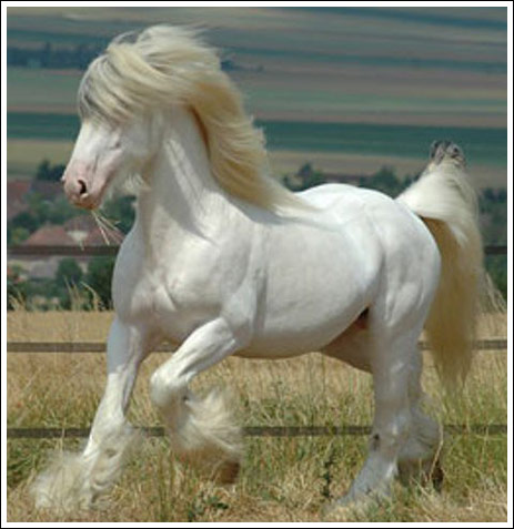 بالصور اجمل حيوان في العالم , صورة احلى الحيوانات فى العالم 2693 8
