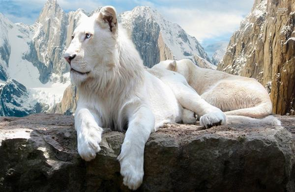 بالصور اجمل حيوان في العالم , صورة احلى الحيوانات فى العالم 2693 9