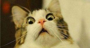 صور قطط مضحكة , اجمل صور مضحكة للقطط