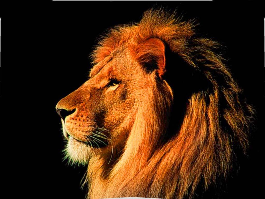 اروع صوره لملك الغابه
