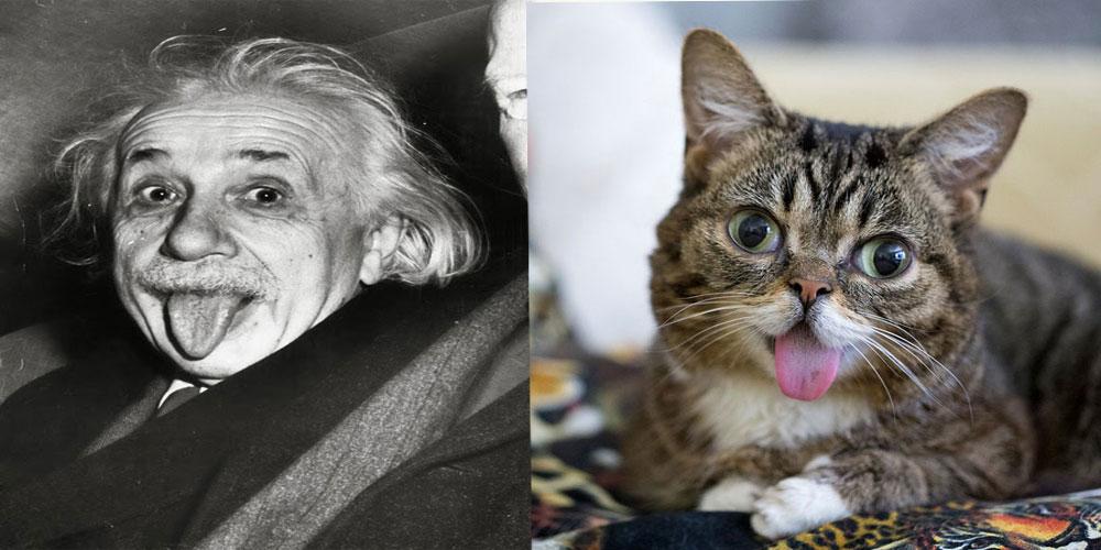 صور صور قطط مضحكة , اجمد صور قطط مضحكه مش هتقدر تغمض عينيك
