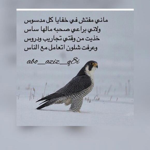 اشعار تويتر روائع الاشعار والخواطر على تويتر حبيبي