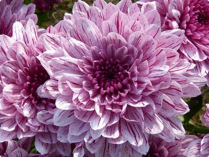 بالصور عبارات عن الورد , احلى كلام عن الورد 6101 10
