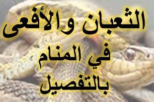 صورة تفسير حلم الثعابين في البيت , هل حلمت بثعبان فى المنام؟شاهد معنا اروع التفاسير