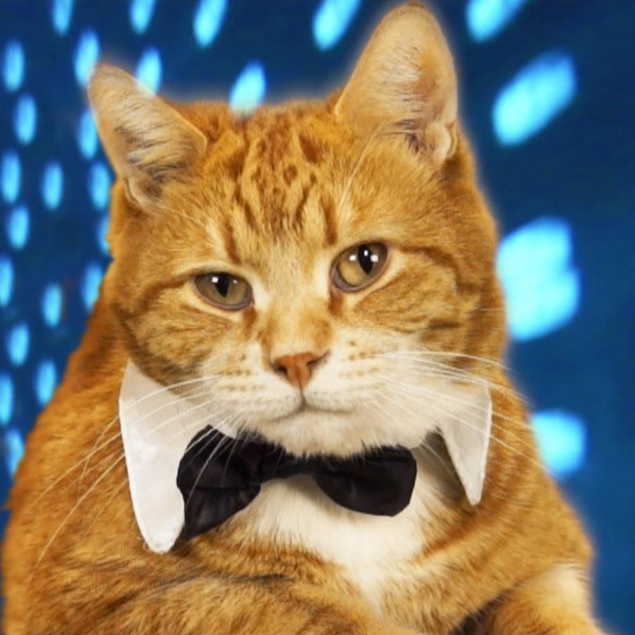 بالصور قطط جميلة , اجمل قطة في العالم 687 1