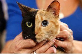 صوره قطط جميلة , اجمل قطة في العالم