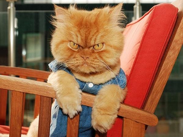 بالصور قطط جميلة , اجمل قطة في العالم 687 2