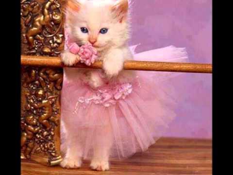 بالصور قطط جميلة , اجمل قطة في العالم 687 3