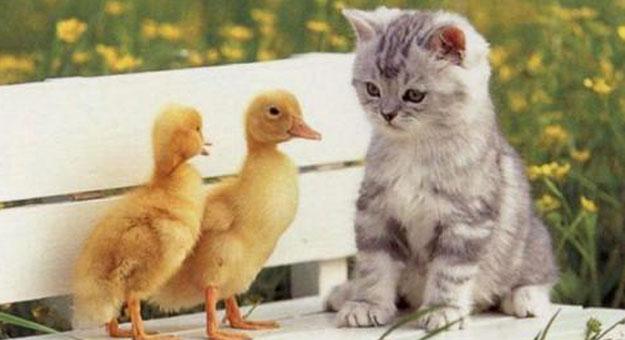 بالصور قطط جميلة , اجمل قطة في العالم 687 4
