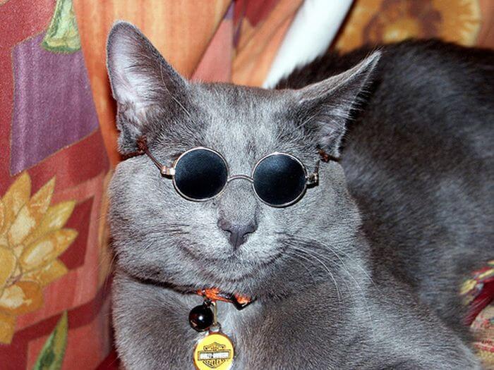 بالصور قطط جميلة , اجمل قطة في العالم 687 7