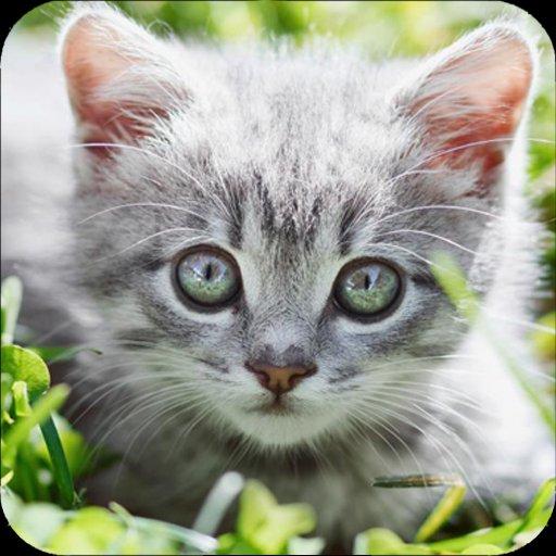 بالصور قطط جميلة , اجمل قطة في العالم 687 8