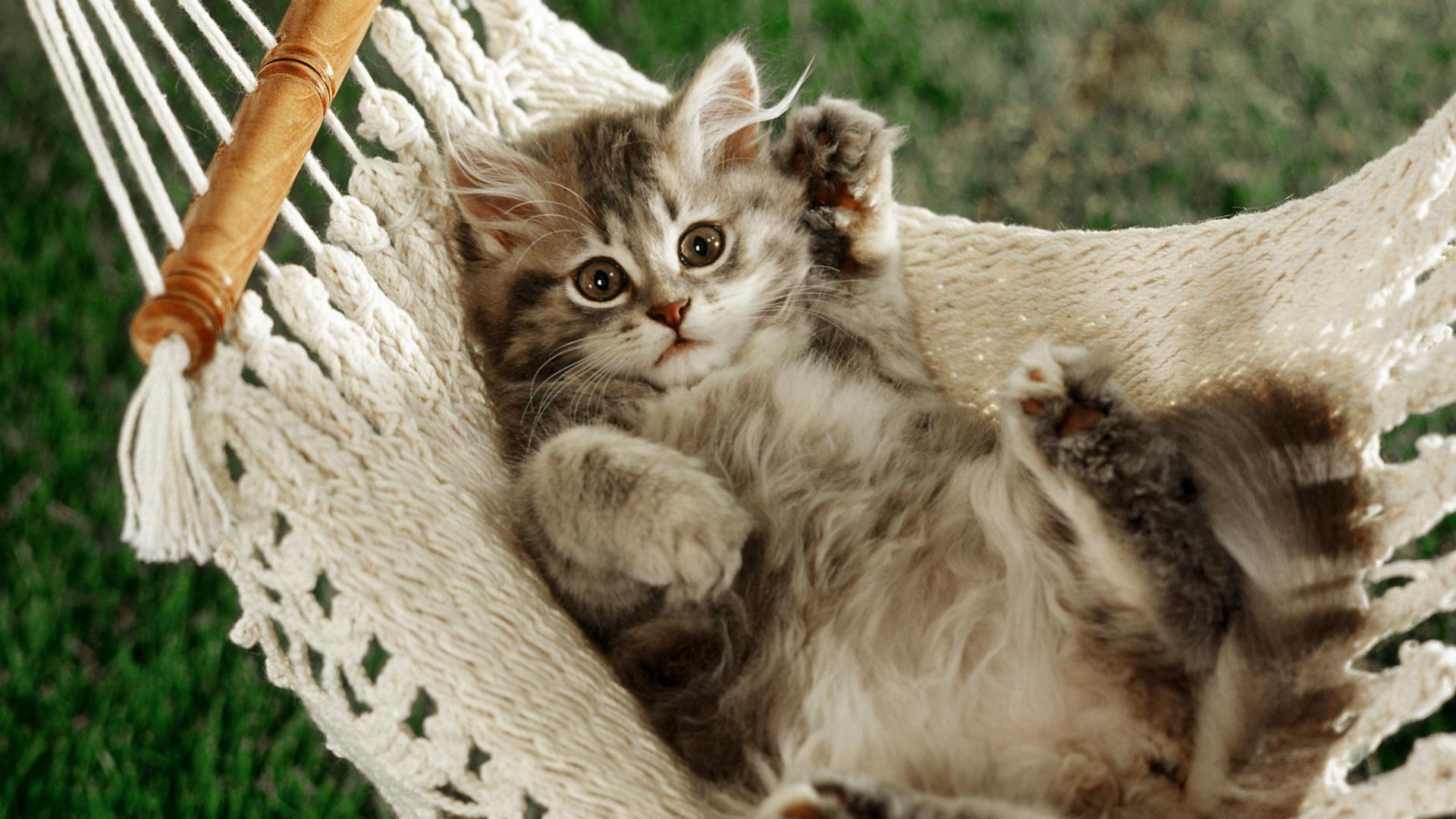 بالصور قطط جميلة , اجمل قطة في العالم 687 9