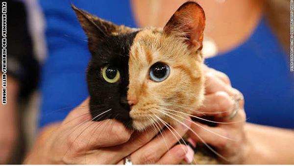 بالصور قطط جميلة , اجمل قطة في العالم 687