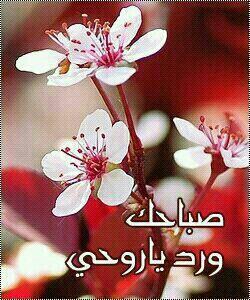 بالصور صباح الورد حبيبتي , اجمل تشكيله صور صباح الورد حبيبتي 4258 10