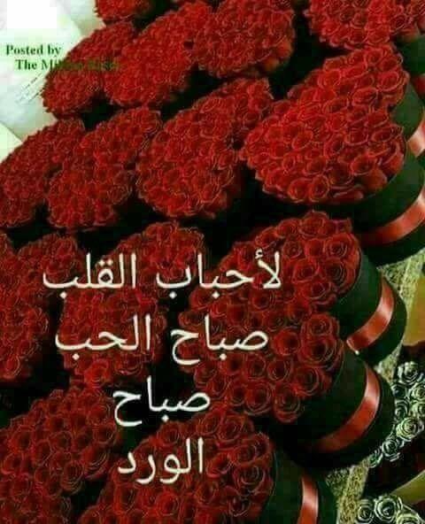 بالصور صباح الورد حبيبتي , اجمل تشكيله صور صباح الورد حبيبتي 4258 11
